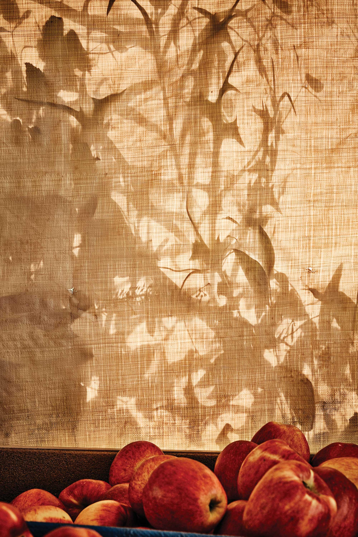 사과 저장소 천막에 비친 농원의 자연이 근사한 수묵화를 그려낸다. ©심윤석