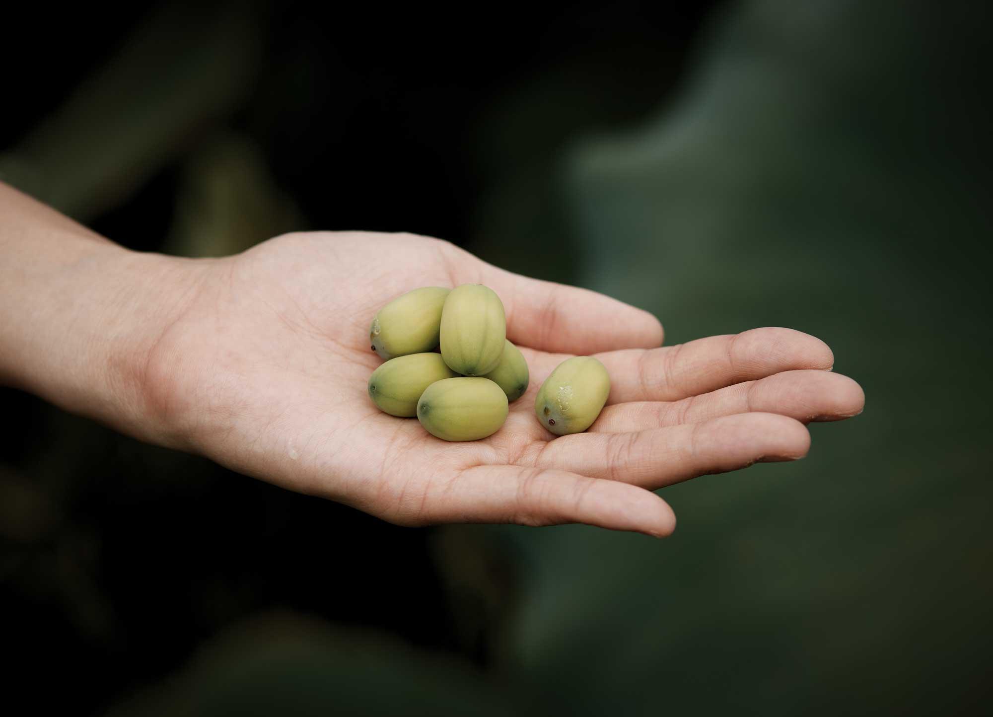 알알이 빼낸 연밥. 껍질만 까서 통째로 먹는다. 아삭한 밤맛이다. ©양성모