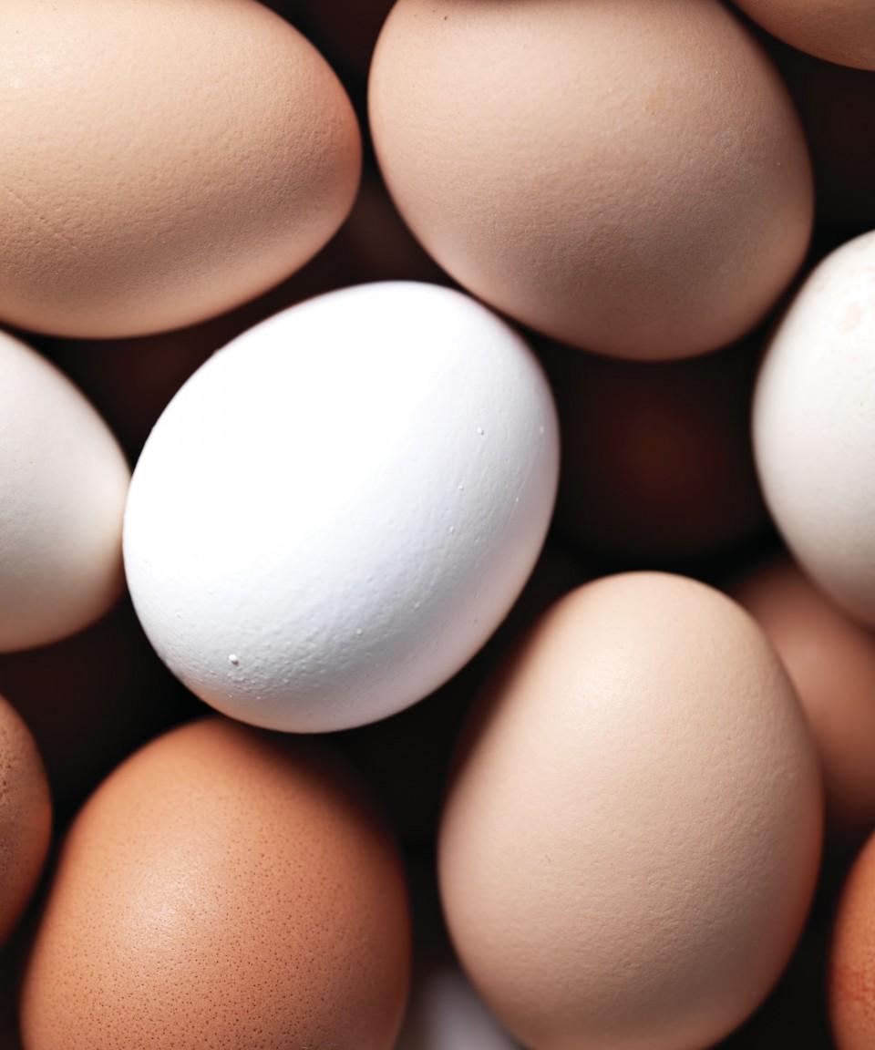 0308-egg7-960x1152.jpg