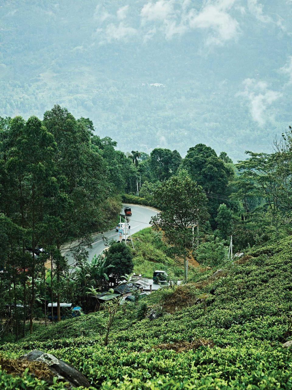 고원지대인 누와라엘리야는 가는 곳마다 차밭이 펼쳐져 있다. © 김재욱