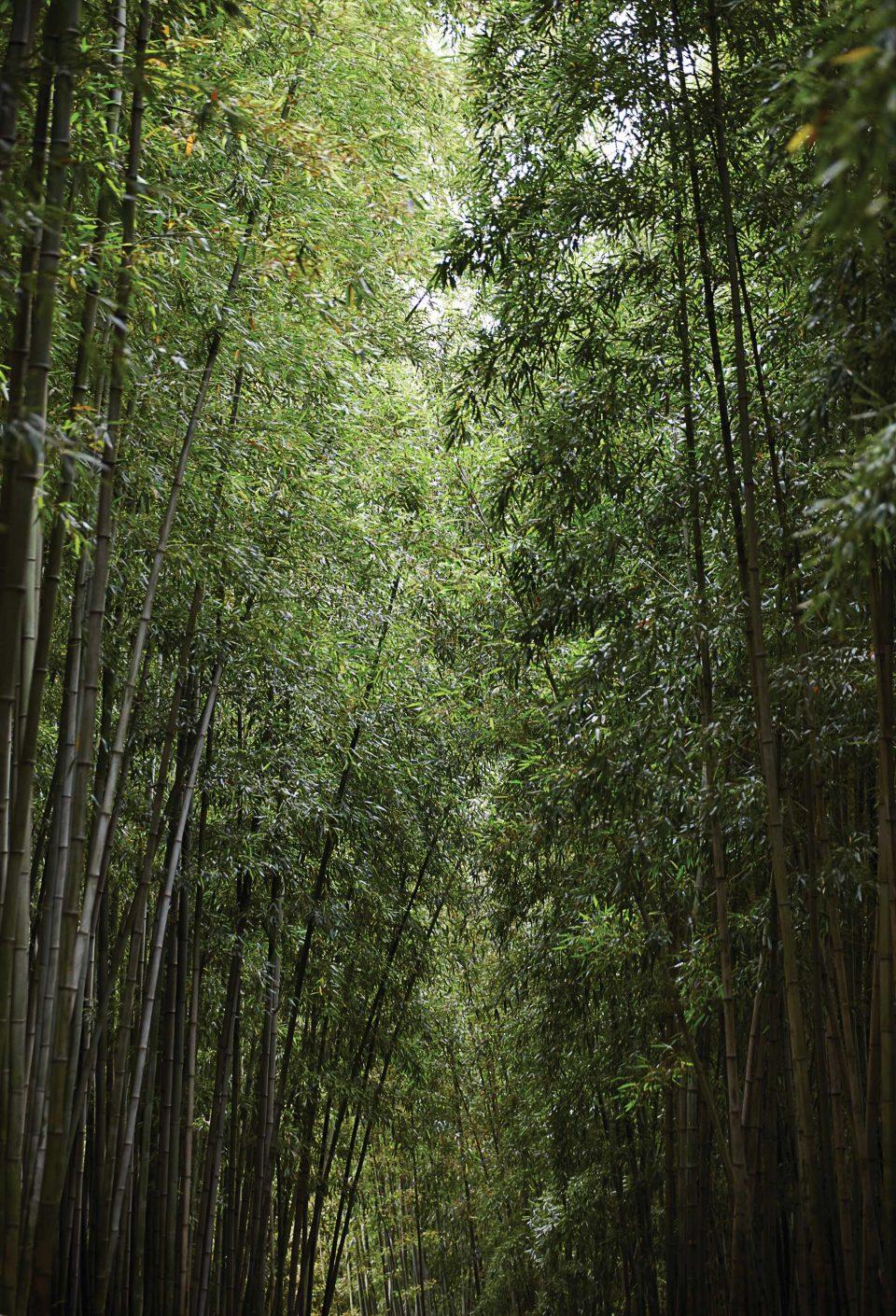 죽녹원에는 바람 따라 댓잎이 부딪히며 온통 서걱거린다. © 양우성