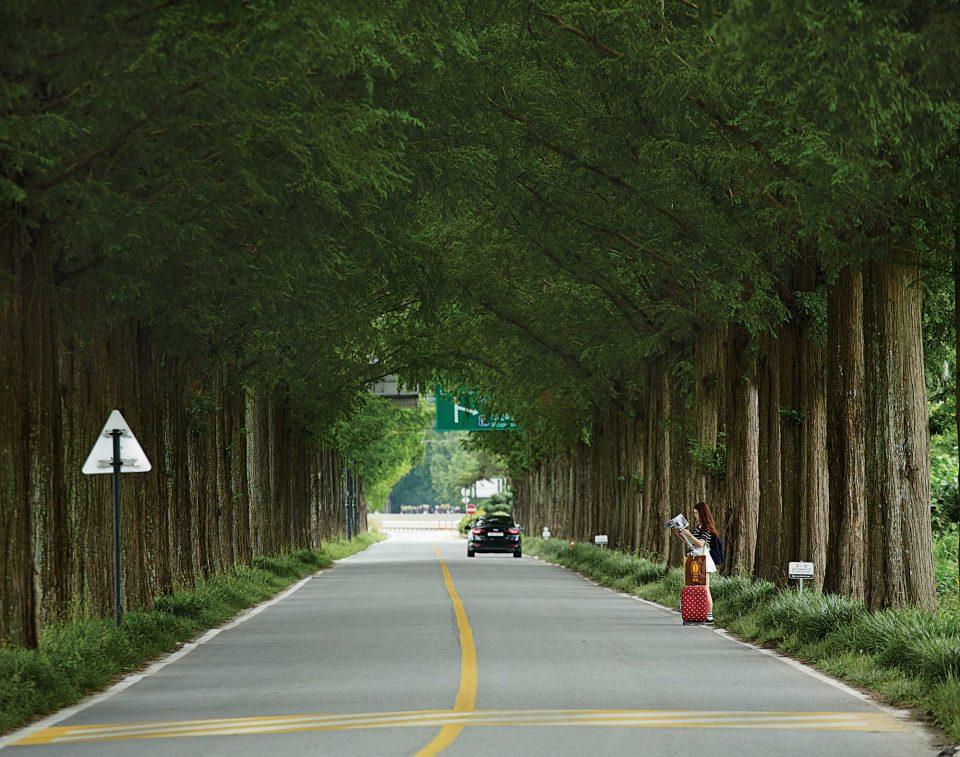 정부가로수시범사업으로 조성된 메타세쿼이아길. '전국의 아름다운 도로 100선'에 꼽히기도 했다.