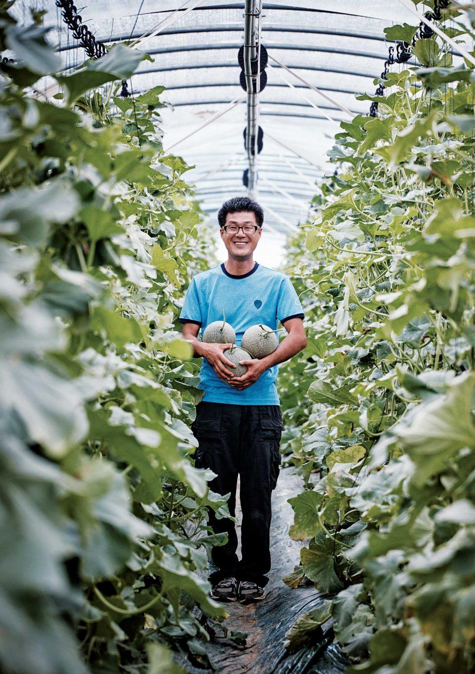요즘 이명재 농부의 농장에서는 하미과 재배가 한창이다.