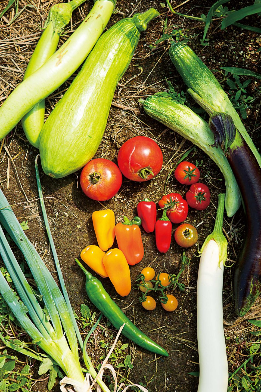 무농약, 무비료, 무경운 농법으로 풀, 벌레들과 함께 자란 채소들은 건강하고 향이 깊다.