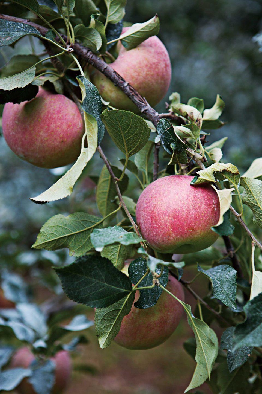 0929-apple3-960x1440.jpg