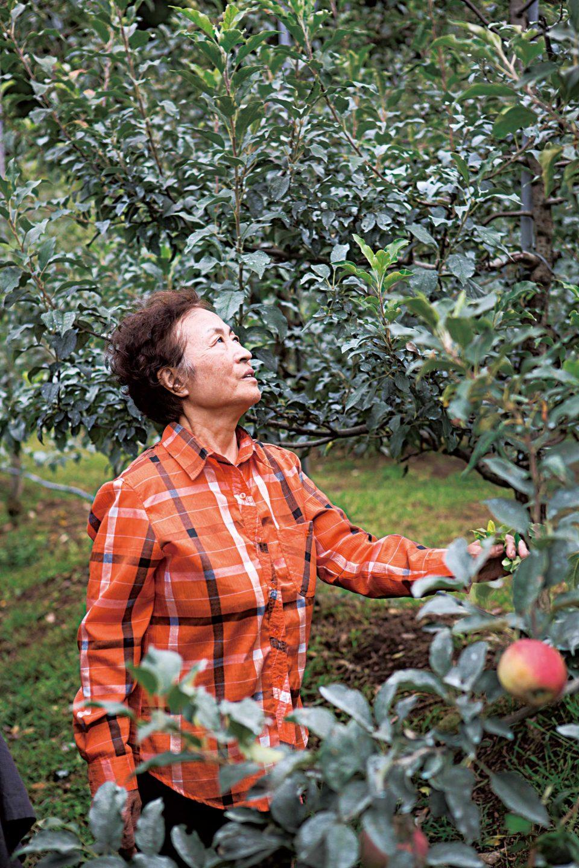안금자 씨는 서비스 업종에서 평생 일한 대로 사과나무들과 주변 자연을 정성껏 대한다.