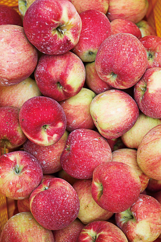 맛과 향이 제각각인 고분대월 농장의 못난이 사과.