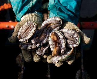 청산바다 특대복 7~8미 1kg, 85,500원