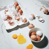달걀 사태에 부쳐 정재훈