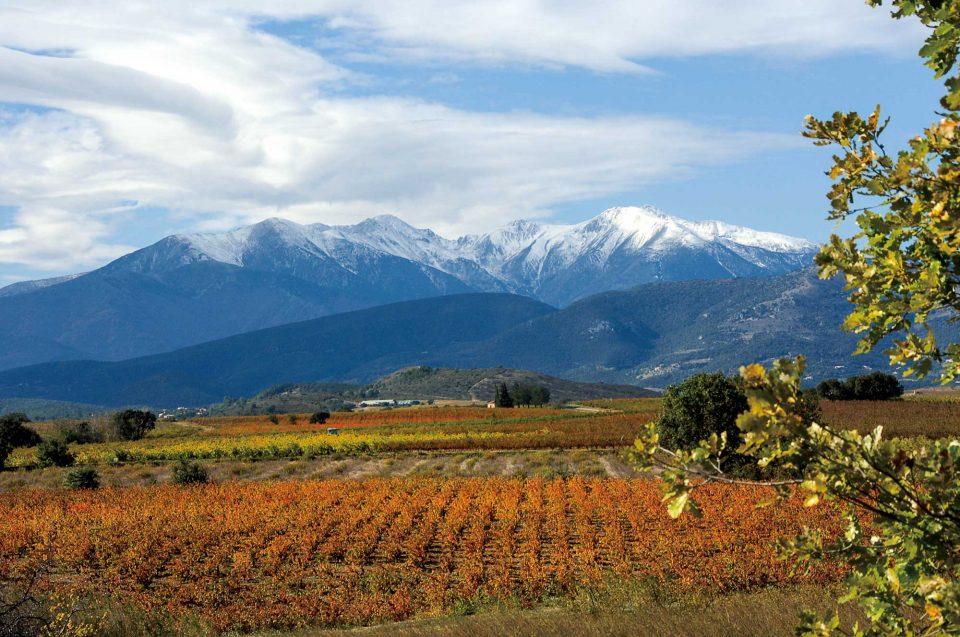 가을로 접어드는 남프랑스 와인 산지 루시용의 포도밭 풍경. 삼면이 산으로 둘러싸인 지형이 포도의 건강을 해치는 바닷바람을 막아준다.