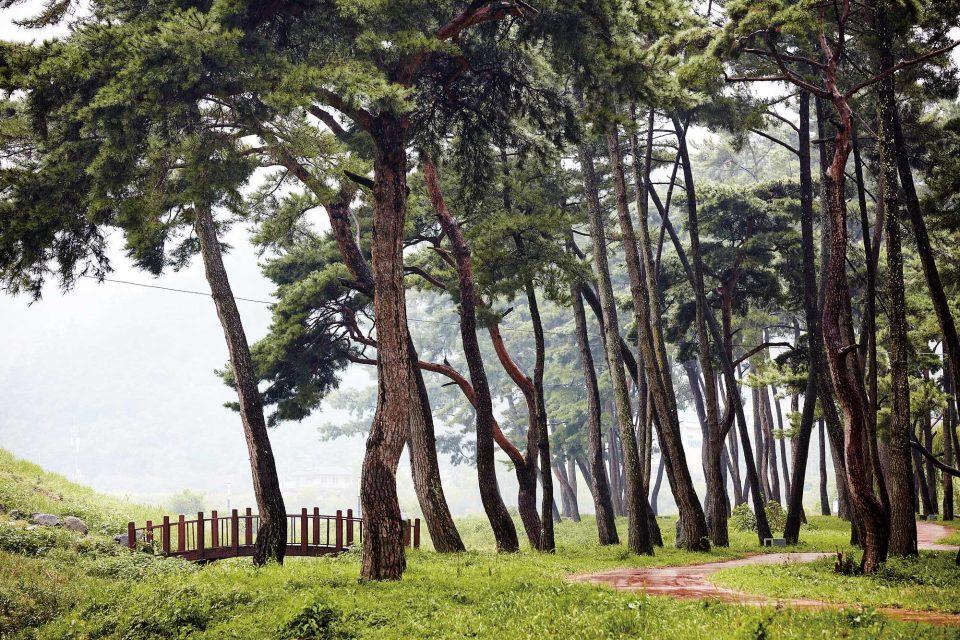 소나무가 우거진 드들강솔밭유원지 전경.