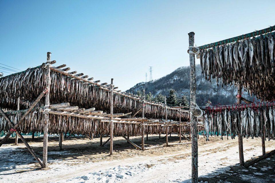 황태덕장 마을로 유명한 대관령 횡계리의 지르메마을 입구 전경.
