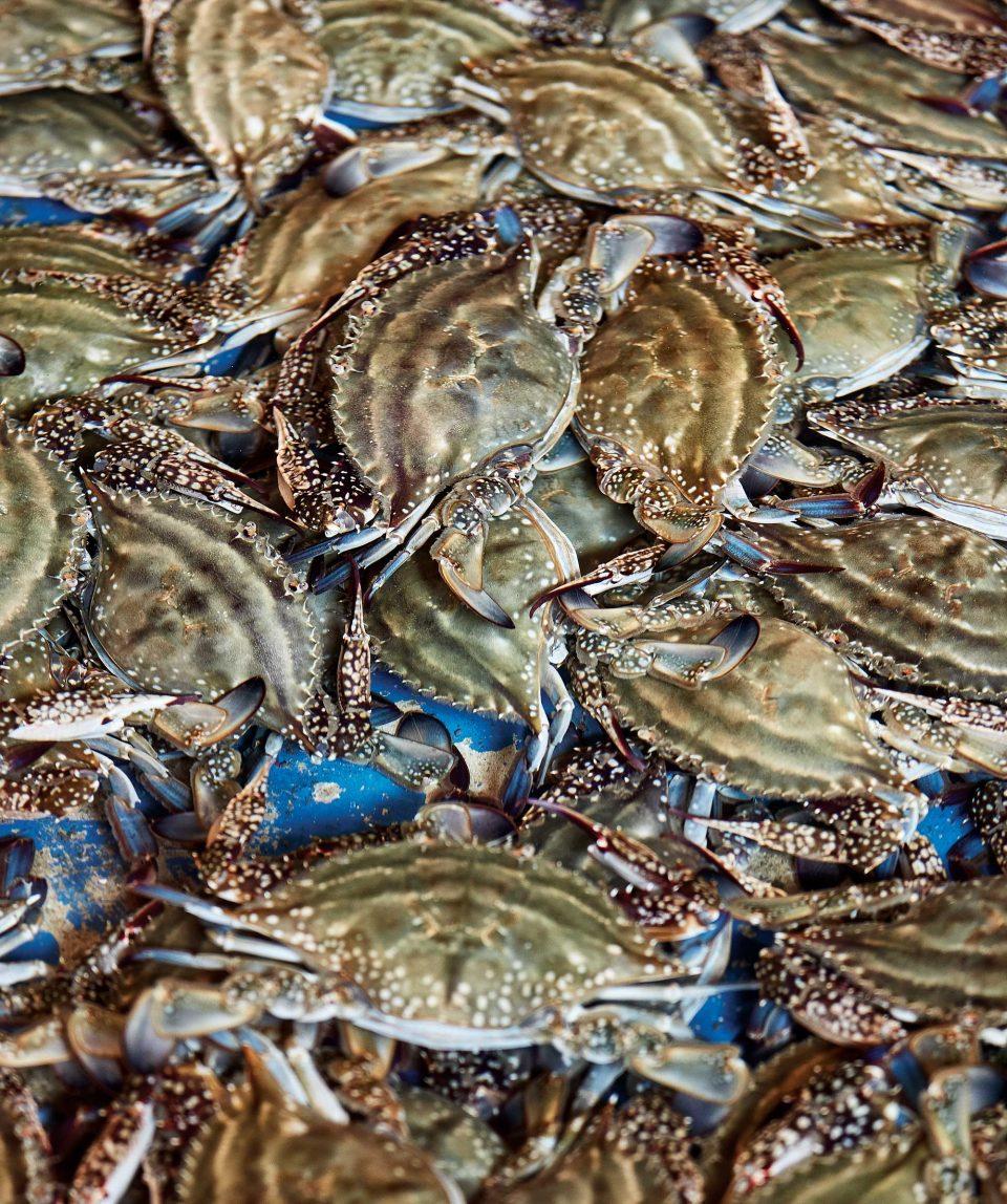 0503-crab2-960x1148.jpg