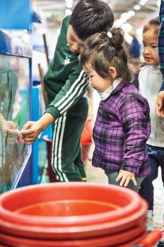 어시장 수족관을 구경하는 아이 손님들의 모습.
