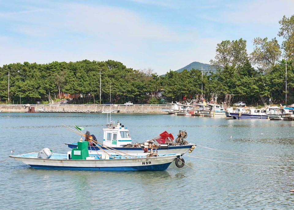 대하잡이 배와 주꾸미 배, 갑오징어 배가 오가는 무창포항의 풍경.