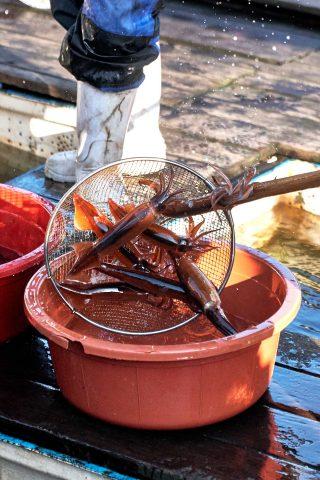 구룡포항 포구에는 지금 시즌 오징어 배와 홍게를 잡는 배가 들어오고 있다. 갓 잡은 신선한 오징어를 어창에서 꺼내는 모습.