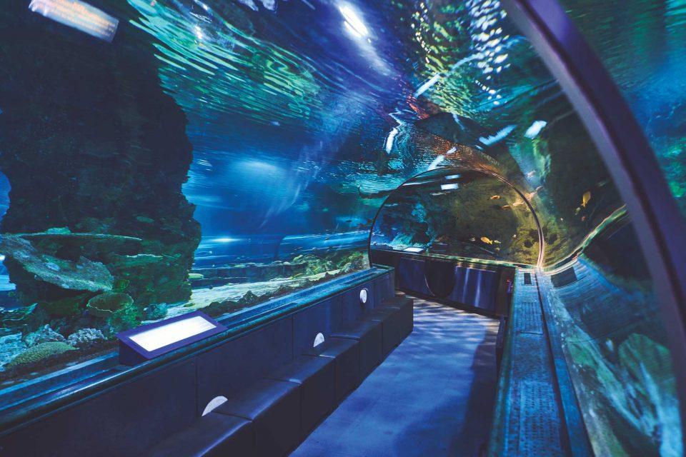 다양한 해양 생물을 볼 수 있는 언더 워터 월드의 아크릴 터널.