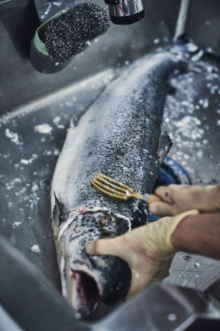 한상호 셰프가 연어의 비늘을 벗기며 손질하고 있다. 한 셰프는 일식에 대한 이해도가 높아 특히 생선을 잘 다룬다.