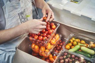 톡톡은 국내에서 다양한 품종의 토마토와 특수 채소들을 계약 농장을 통해 재배하고 있다.