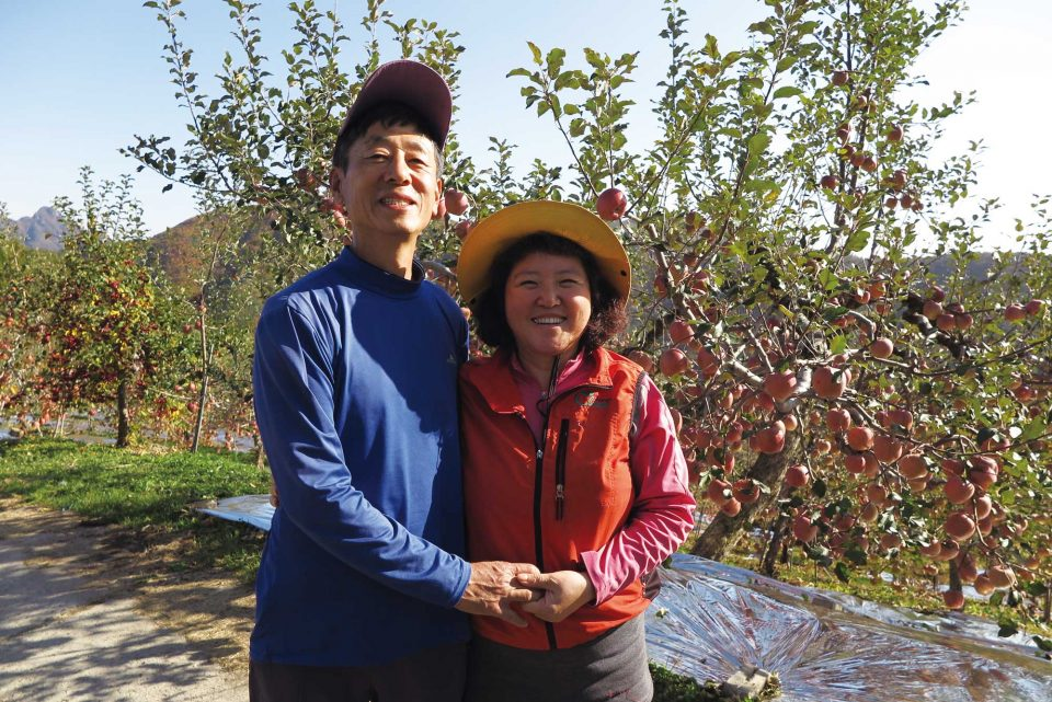 민들레 사과농원은 부부가 행복한 만큼만 사과 나무를 키운다.